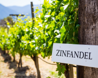 The best foods to pair with Zinfandel