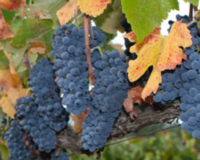 September is Wine Month in California – let's celebrate!