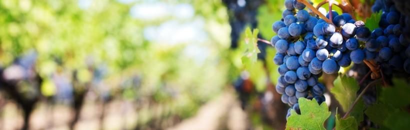 Gov. Brown declares September 'California Wine Month'
