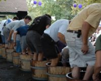 The history of the grape stomp